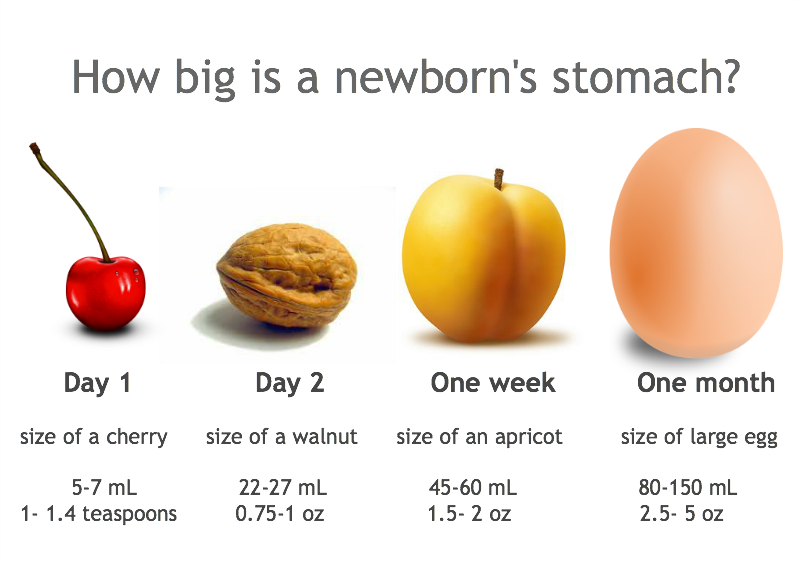 newborn stomach size